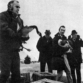 "NEW ARRIVALS: Izaak Walton League provides 10 ""Canadensis Maxima"" for NAL site. Here (l. to r.), Bob Hines, NAL Farm Manager; Arthur Leverenze, of Elgin; John Barry, NAL Director's Office, and State Rep. R. Bruce Waddell, of Dundee, uncrating geese to be placed at the fire pond near the Curia."